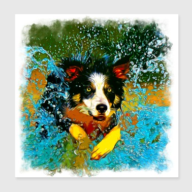 gxp border collie jumps in the water vector art - Poster 20x20 cm