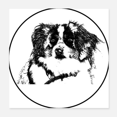 Cupid Border Collie - Poster 20x20 cm
