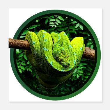 Slange Green Tree Python Reptile Keeper Chondro Fan - Poster