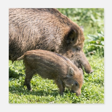 Wild Boar Boarling boar (Sus scrofa) in the forest - Poster