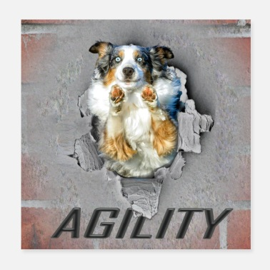 Dog Sports Agility, Dog Sport, Border Collie, Poster - Poster