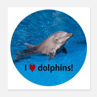 South Gift Idea Photo Dolphin I love dolphins - Poster