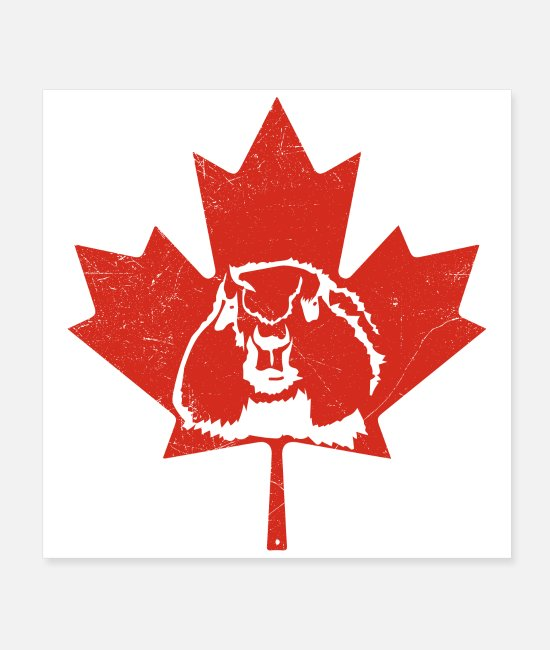 Red Posters - Canada groundhog maple leaf Canada flag poison - Posters white