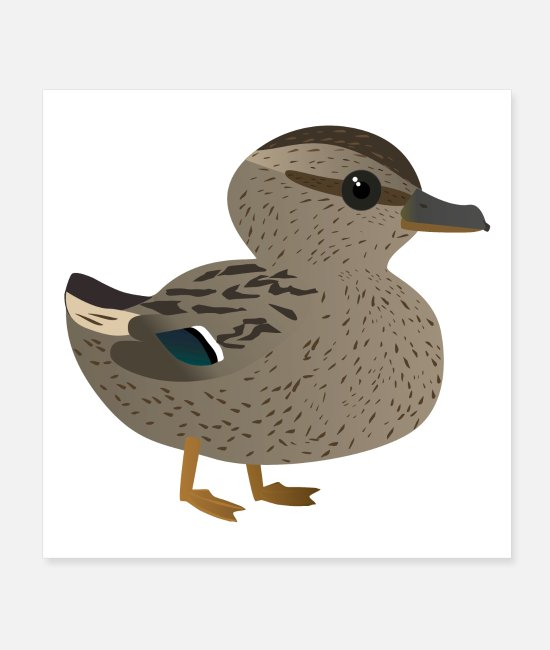 Water Posters - Cute female duck - Posters white
