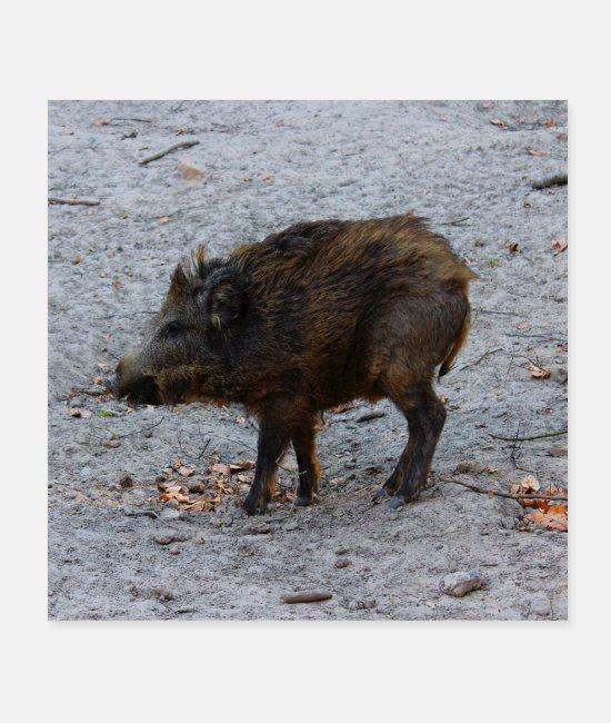 Hog Posters - Wild boar hunter ranger hunt forest gift - Posters white