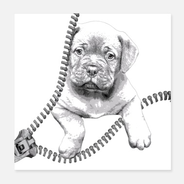 Dogue De Bordeaux Dogue de Bordeaux black and white puppy - Poster