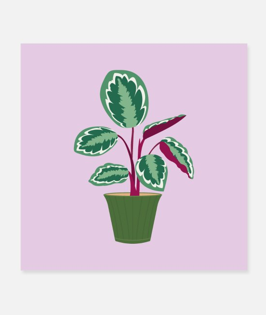 Grow Posters - Calathea Rosy - Posters white