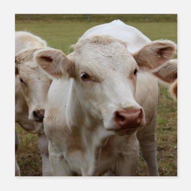 Animal Farmer Cow cows farmer animal farmer cattle calf gift - Poster