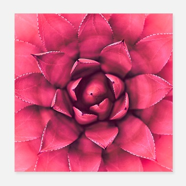 Fauna Flower bloom plant nature - Poster