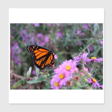 Monarch Butterfly flies in Canada, Toronto,Ontario - Poster 20x20 cm