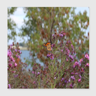 monarch butterfly in Toronto Canada - Poster 20x20 cm