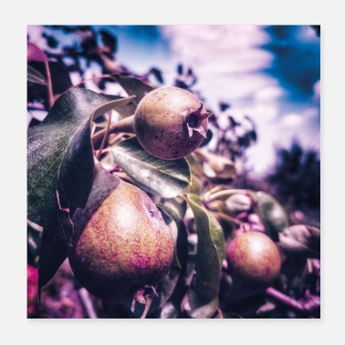 Pear pears - Poster