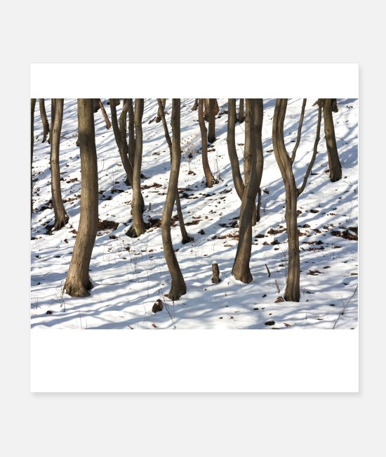 Snowy Posters - The forest for the trees poster - Posters white