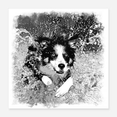 German Shepherd gxp border collie jumps in the water vector sw - Poster 40x40 cm