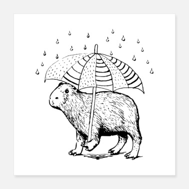 Rodent Capybara is walking in the rain - Poster 40x40 cm