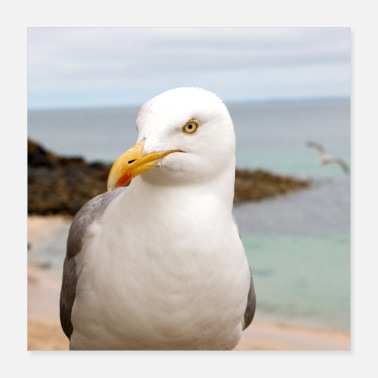 For Her Herring gull (Larus argentatus) on the beach Herring - Poster
