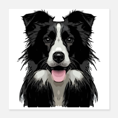 Bordercollie raja1 1 - Juliste