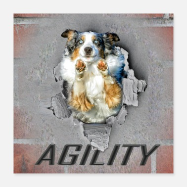Border Collie Agility, Dog Sport, Border Collie, Poster - Poster