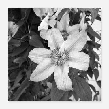 clematis 1 sw - Poster