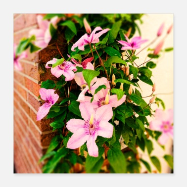 clematis 2 - Poster
