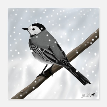 Wagtail Bird Painted wagtail in snow bird animal design - Poster