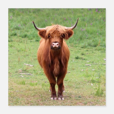 Animal Farmer Highland cattle cow cattle cattle farmer animal farmer - Poster