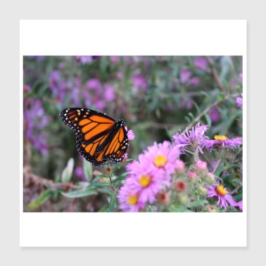 Monarch Butterfly flowed in Canada, Toronto, Ontario - Poster 40x40 cm