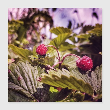 Wild strawberries - Poster 40x40 cm
