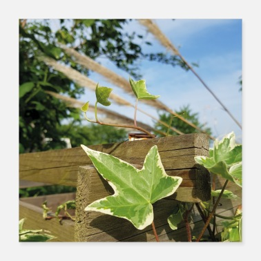 Ivy - nature - summer day - Poster