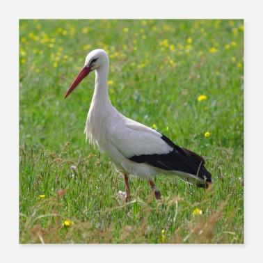 Storch Storch - Poster