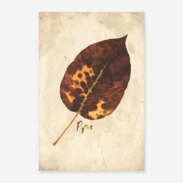 Parchment Herbaria ~ pear I [botanical] - Poster