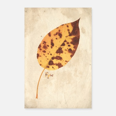 Parchment Herbaria ~ Pear II [botanical] - Poster