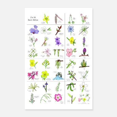 Botanical Bach flowers poster - Poster