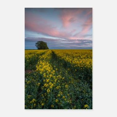 Tractor In the middle of the rapeseed field - Poster