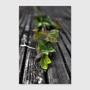 young ivy - Poster 24 x 35 (60x90 cm)