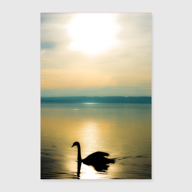 Swan Lake Swan on the Ammersee - Poster 24 x 35 (60x90 cm)