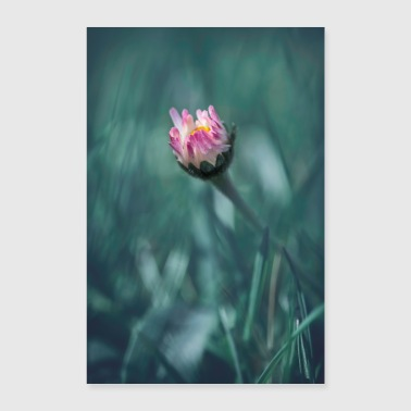 Daisies flower blossom spring - Poster 24 x 35 (60x90 cm)
