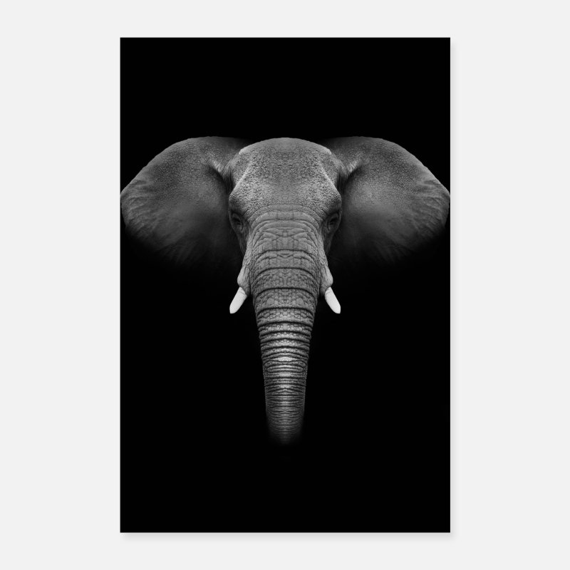Animal Collection V2 Posters - Elephant animal poster - Posters hvid