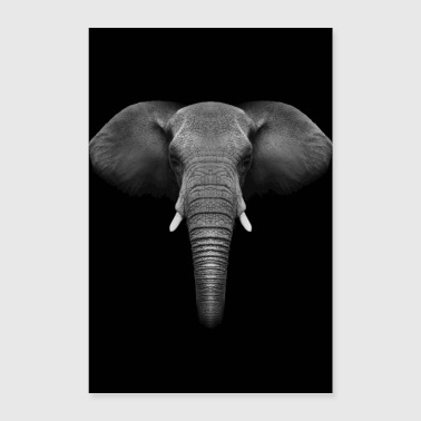 Olifant dier records - Poster 60x90 cm