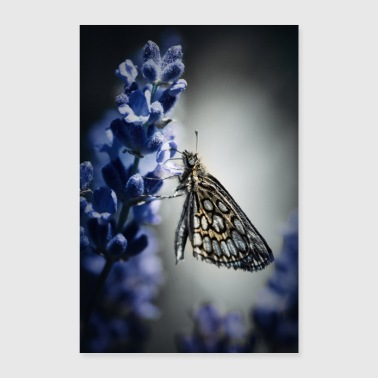 Butterfly and lavender - Poster 24 x 35 (60x90 cm)