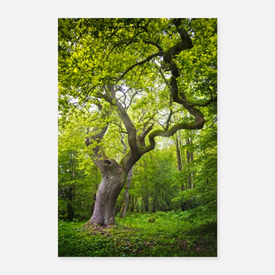 Bomen Posters - oude boom - Posters wit