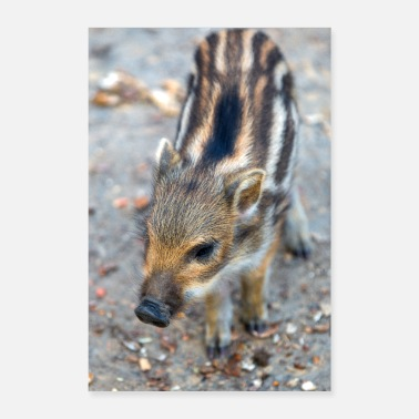 Wild Boarling boar (Sus scrofa) in the forest - Poster 24 x 35 (60x90 cm)
