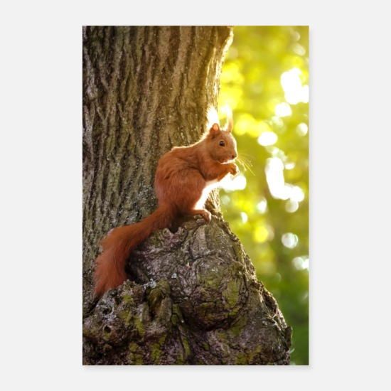 Small Posters - squirrel - Posters white
