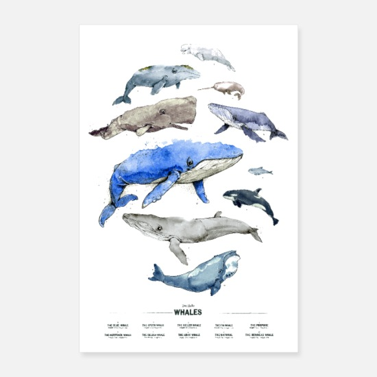 Bluecontest Poster - Wale (Whales) - Poster Weiß