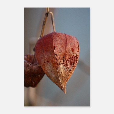 Winter Physalis in winter - Poster 24 x 35 (60x90 cm)