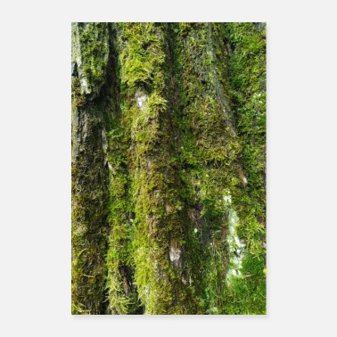 Rainforest Old as a tree - Poster 24 x 35 (60x90 cm)