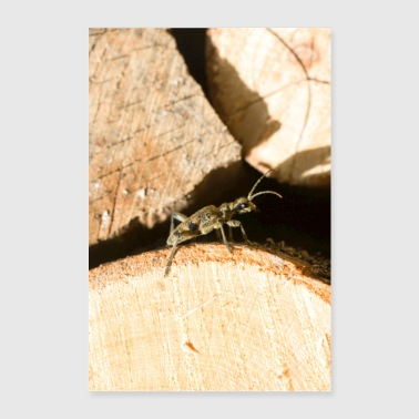 Small insect on wood - Poster 24 x 35 (60x90 cm)