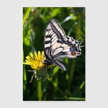 Butterfly on blossom - Poster 24 x 35 (60x90 cm)