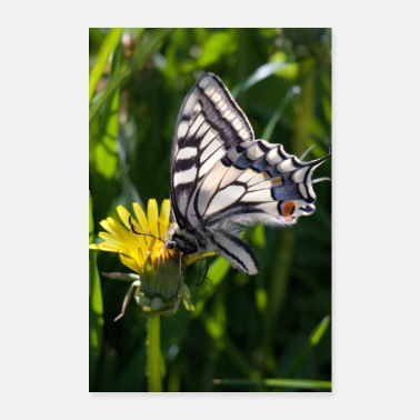 Eco Butterfly on blossom - Poster 24 x 35 (60x90 cm)