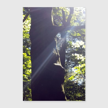Tree with small cobweb - Poster 24 x 35 (60x90 cm)
